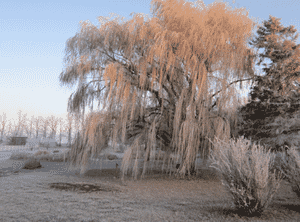 Tallgrass Recovery & Sober Living Homes Sioux Falls South Dakota